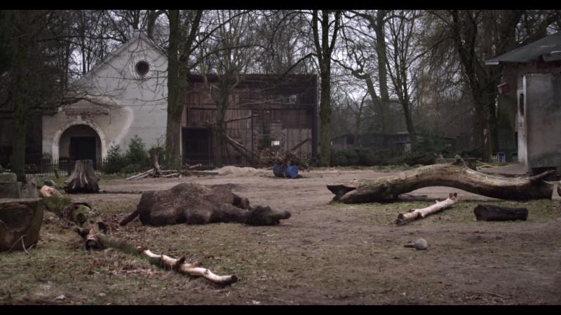 KUPRANUGARIS / THE CAMEL
